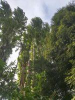 M Hodson Tree Services
