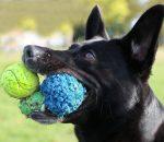 Bloxwich Pet Services